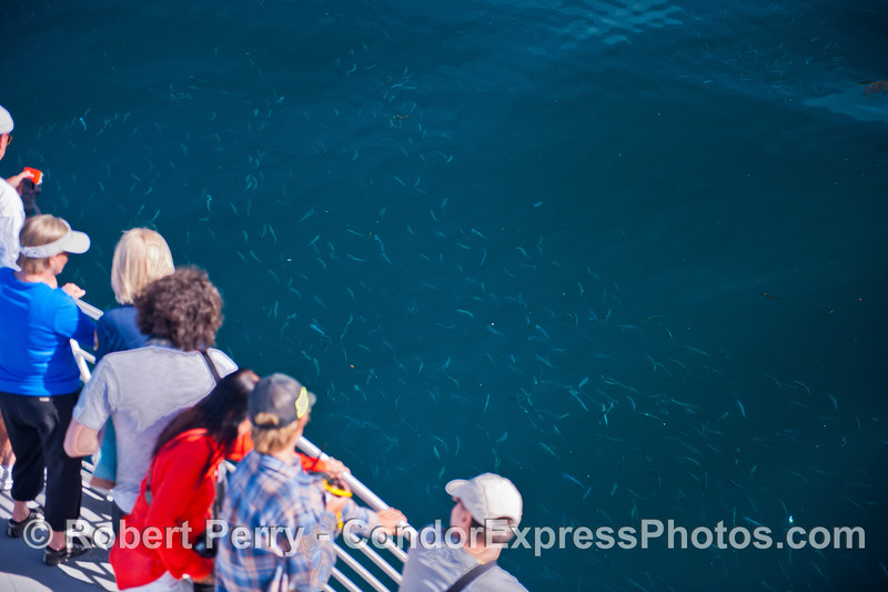 Humans and a sardine school