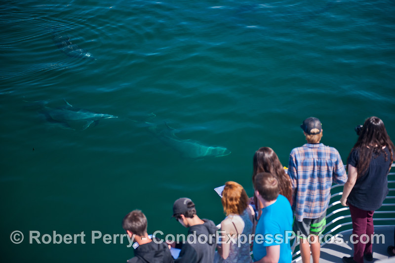Humans and bottlenose dolphins