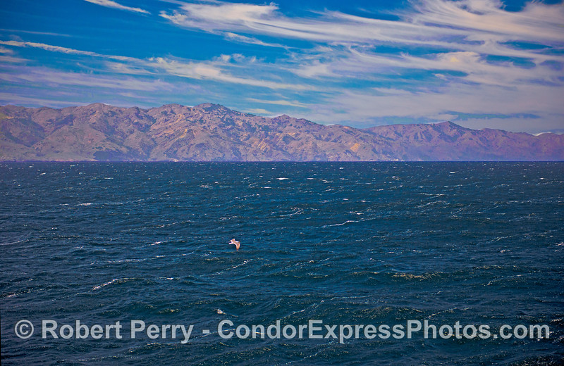 A fresh breeze whips through the Santa Barbara Channel - exhilarating!
