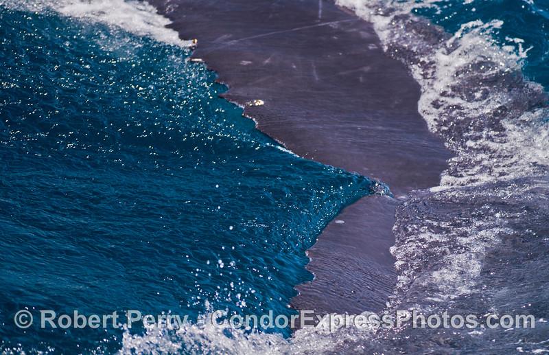 Megaptera novaeangliae tail fluke 2014 05-31 SB Channel-178