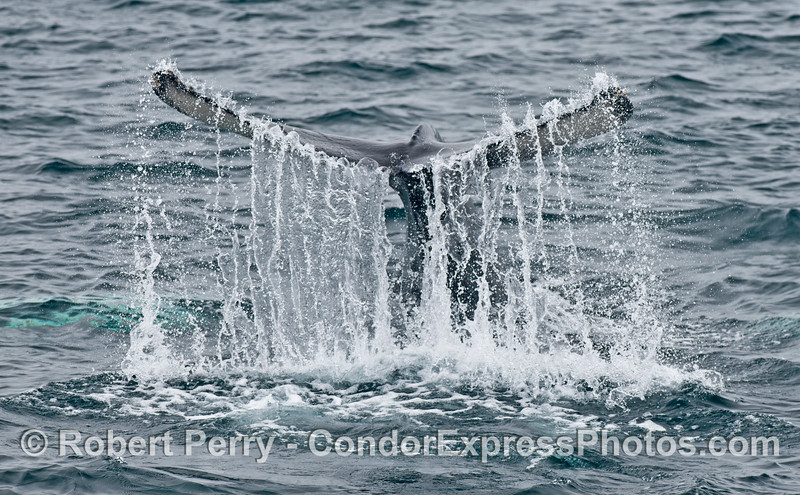 A waterfall sculpture featuring a live humpback whale in the Santa Barbara Channel.