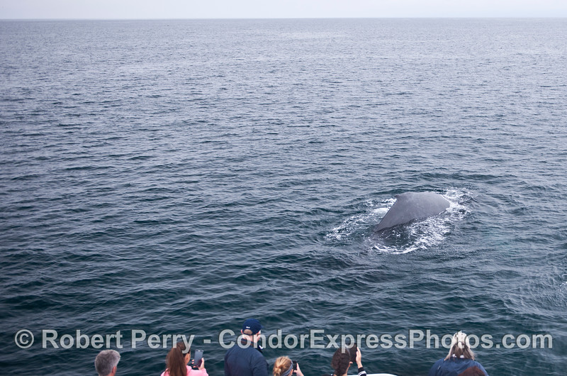 A friendly approach by a humpback whale.