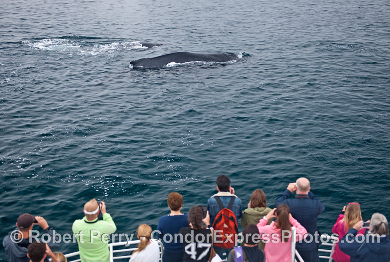 Two humpback whales and twelve human beings.