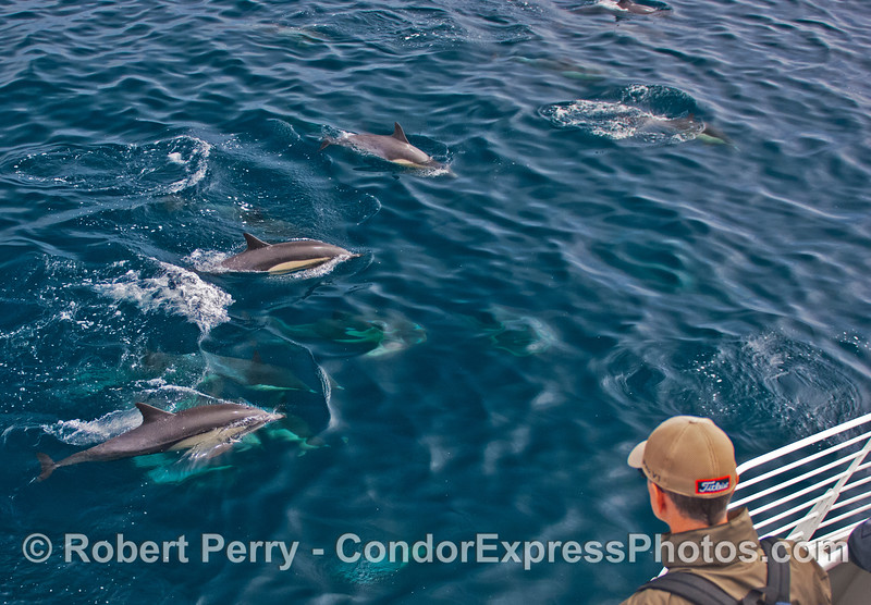 Very clear water and lots of common dolphins.