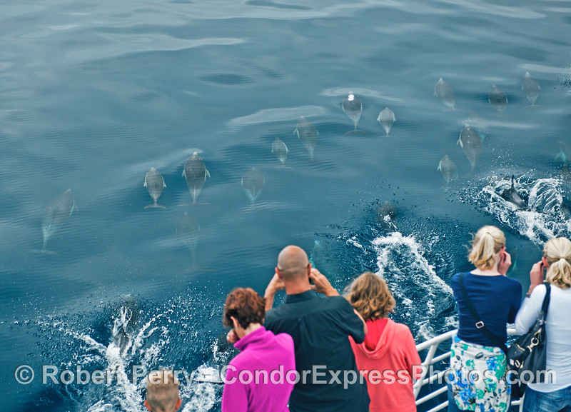 A line of humans enjoys a line of dolphins