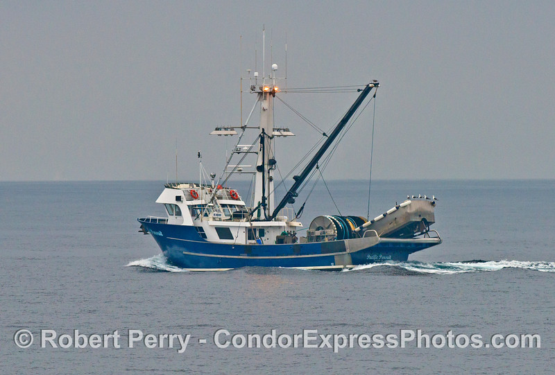 A commercial squid fishing vessel - the purse seinter Pacific Pursuit
