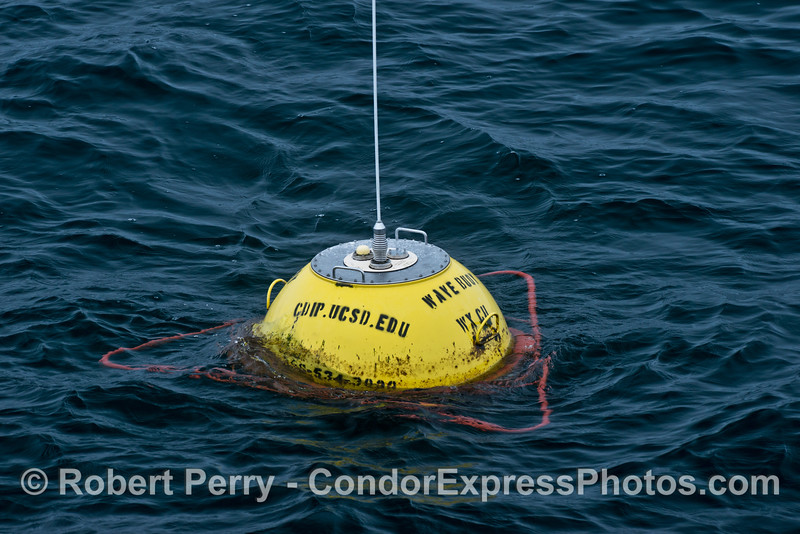 Ocean swells are measured and forecasts are calculated using a system of buoys like this one off the coast of Santa Barbara.  Data can be viewed at http://cdip.ucsd.edu/?nav=recent&sub=forecast