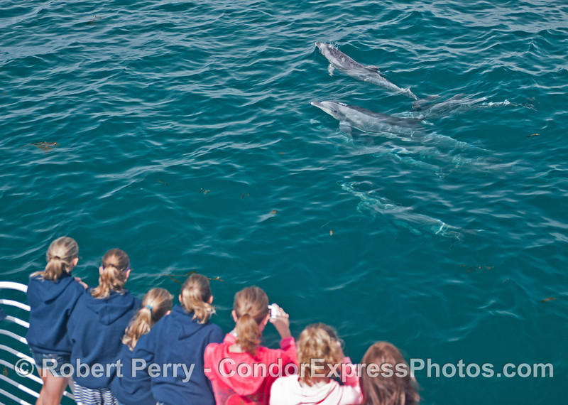 The equestrian club girls get watched by a curious bottlenose dolphin