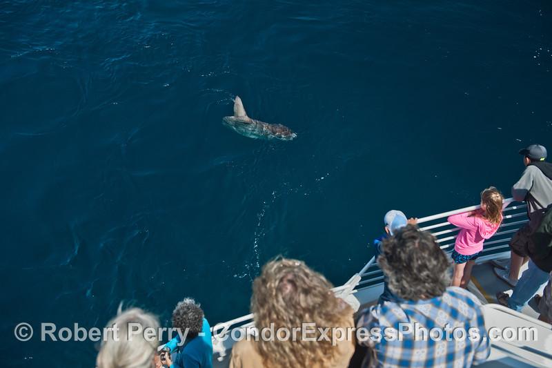 Mola mola & passengers 2014 07-08 SB Channel West-024