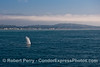 Visit Santa Barbara and see the whales - humpback