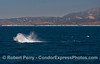A humpback throws its tail making a dramatic splash set against the wide blue ocean and pristine coastline