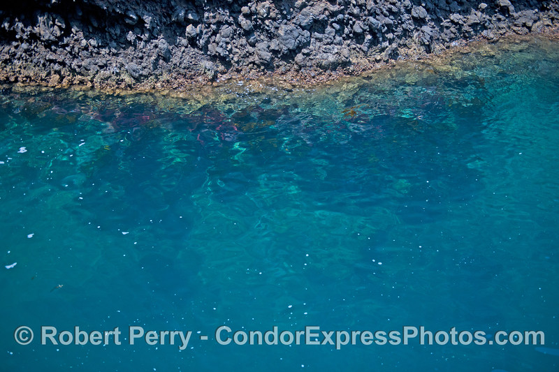 Clear blue water and the intertidal volcanic rocks of the northwestern region of Santa Cruz Island