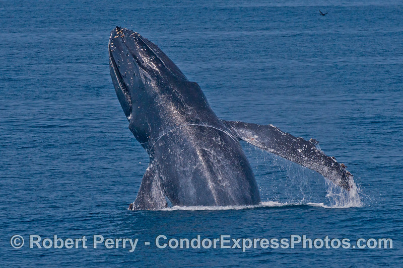 Image 4 of 4:  A second breach sequence.