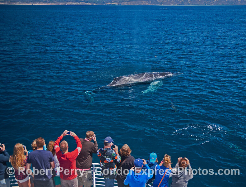 """Lucky,"" the humpback whale gets very friendly in clear blue water"