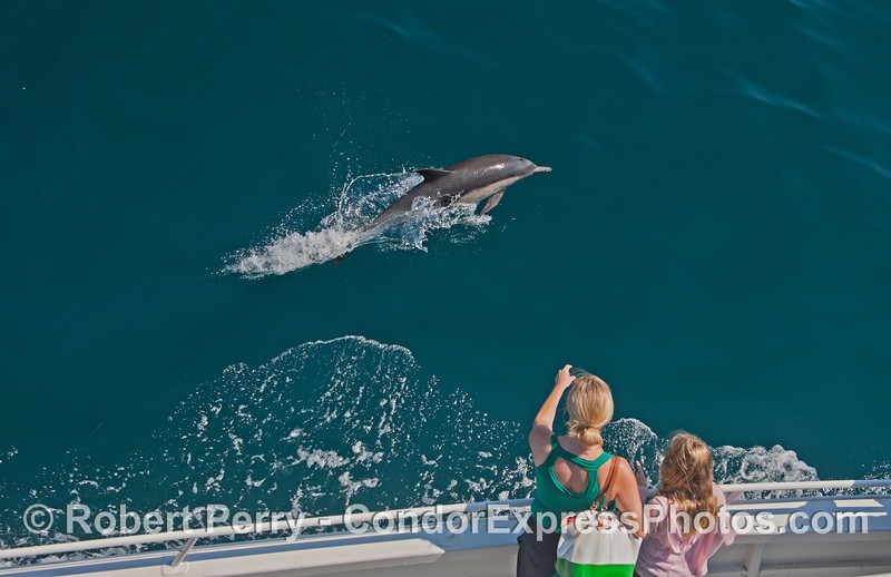Dolphin fans get a great look at a friendly mammal.