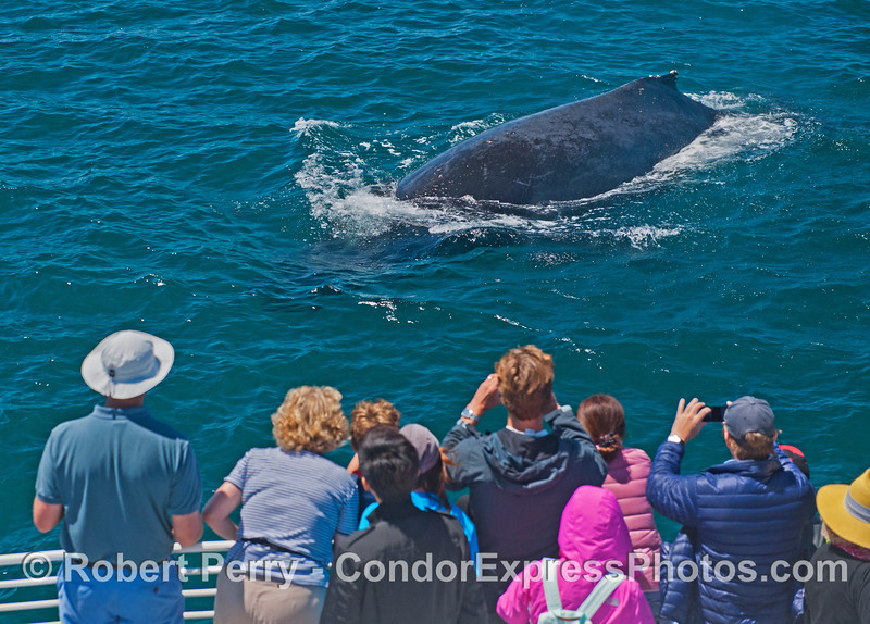 An extremely friendly humpback whale greets its fan club.