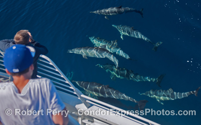 Blue water yields blue dolphins and a friendly encounter