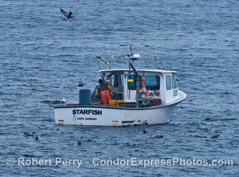 Image 2 of 3:  a commercial crab fisherman at work bringing up his trap
