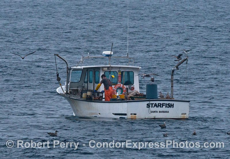Image 3 of 3:  a commercial crab fisherman at work bringing up his trap