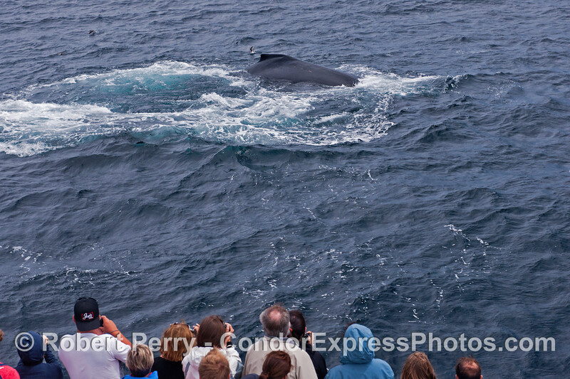 Another friendly and close visit by a humpback whale