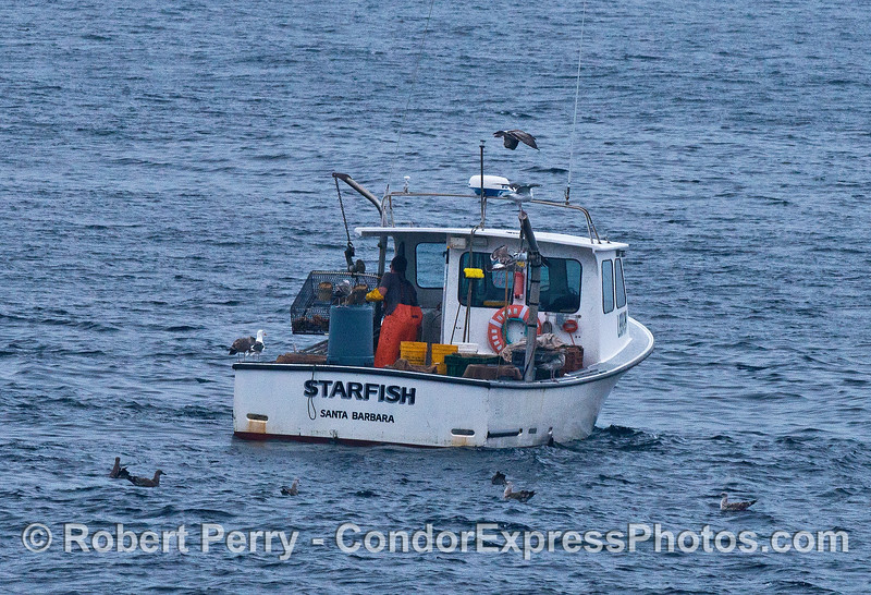 Image 1 of 3:  a commercial crab fisherman at work bringing up his trap