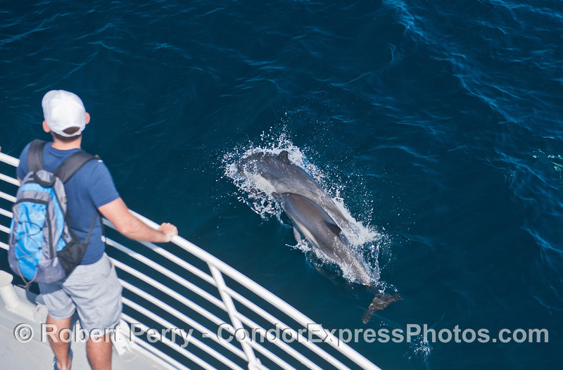 Two friendly dolphins