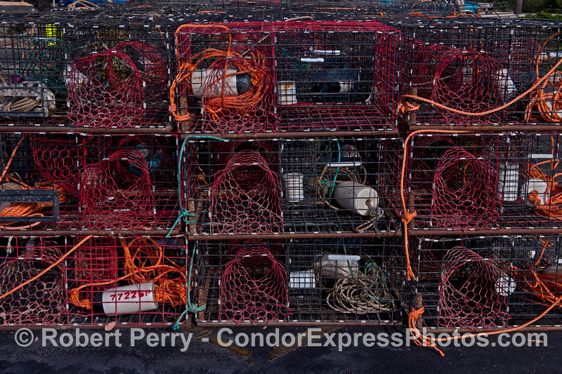 California spiny lobster traps - red and orange