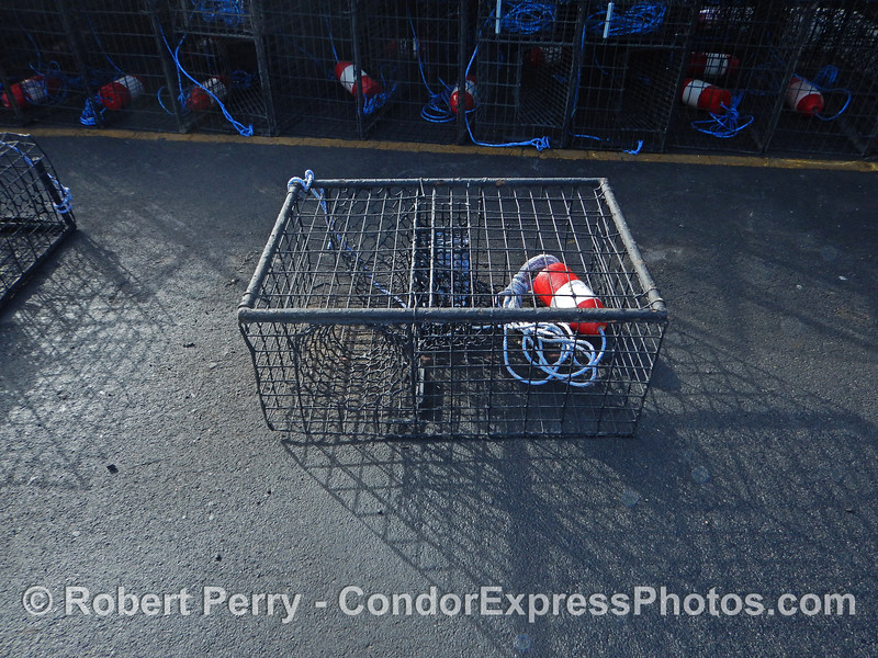 California spiny lobster traps - single trap