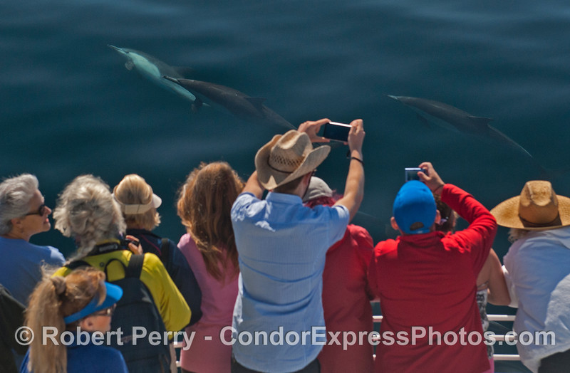 Humans and dolphins - in the wild