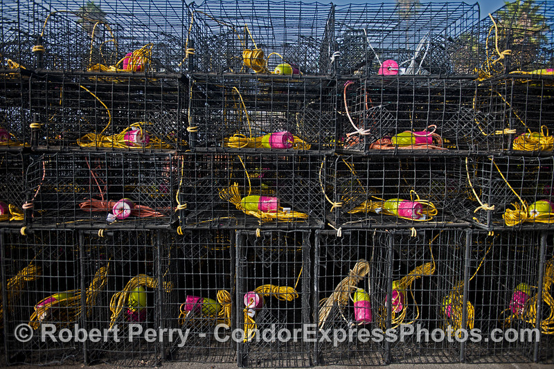 California spiny lobster traps - magenta and yellow