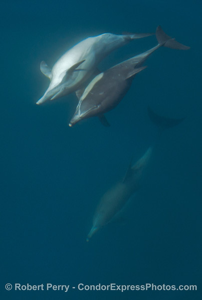 Dolphins down deep - various levels and antics