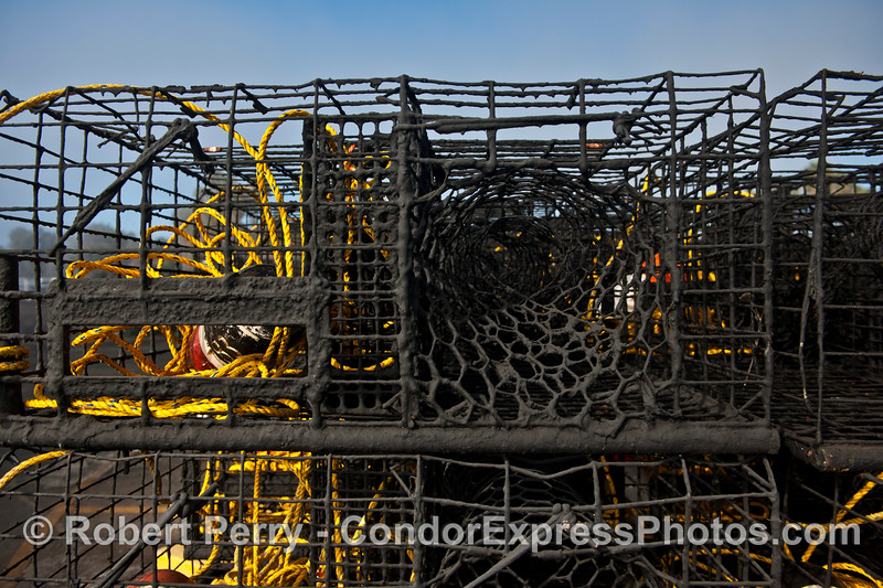 California spiny lobster traps - close up