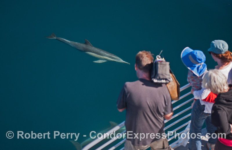 Camera man and other fans meet a common dolphin
