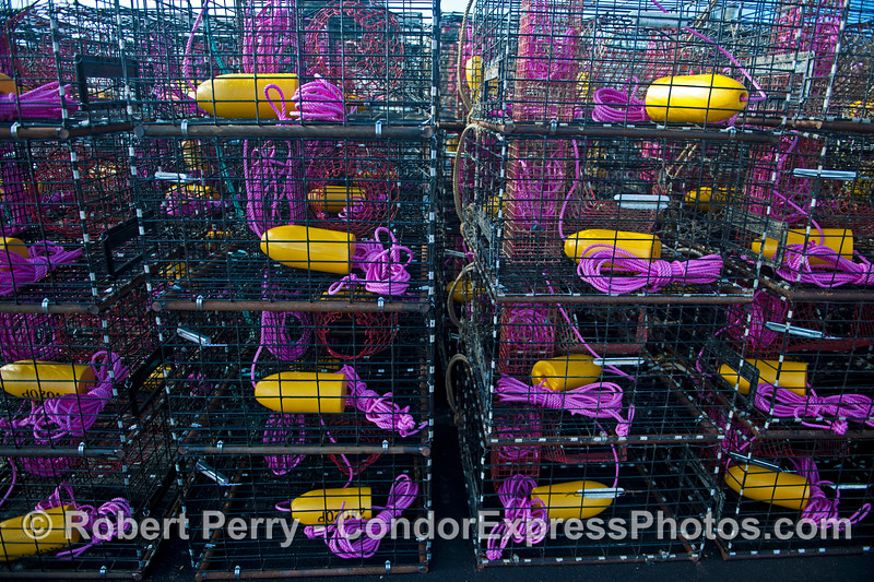 California spiny lobster traps - magenta/purple and yellow