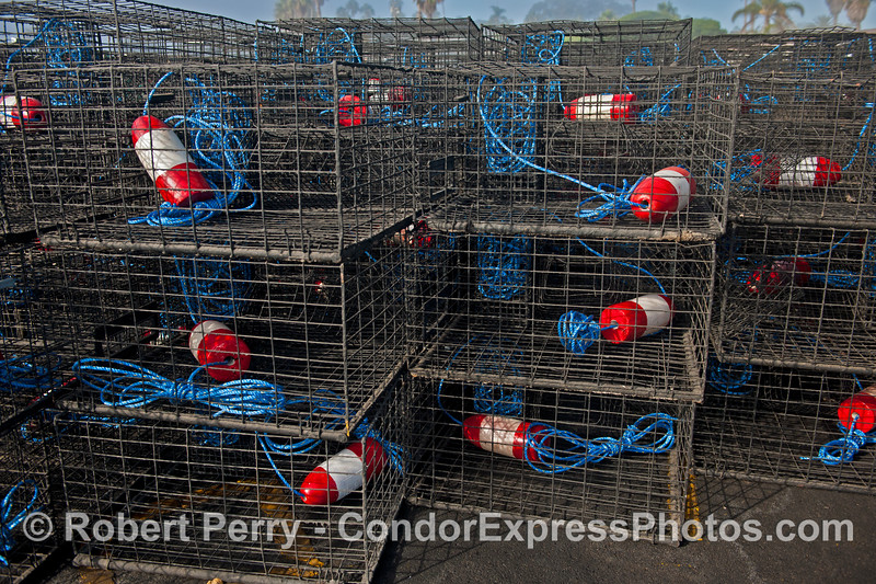 California spiny lobster traps - red, white and blue