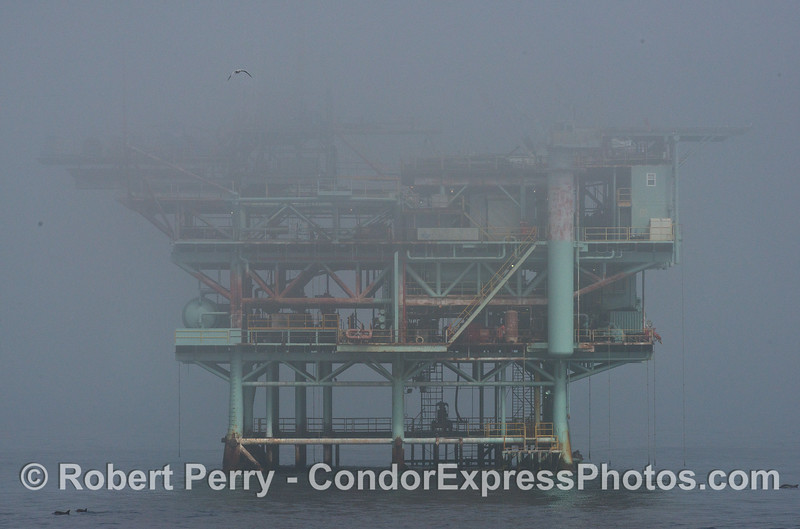 Platform Houchin in the fog.  Common dolphins can be seen below.