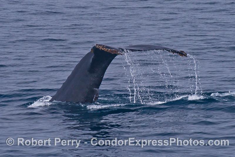 Humpback whale waterfall
