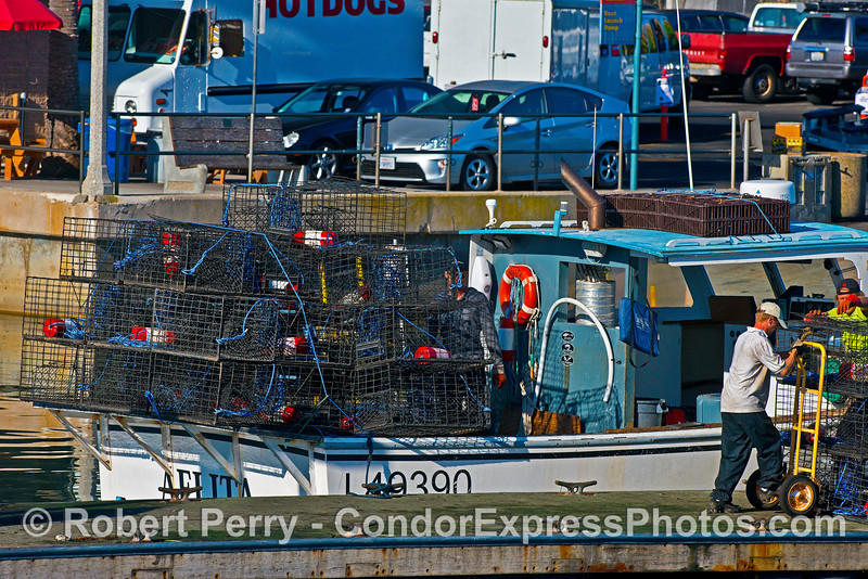 "Commercial fishing vessel ""Aelita"" loads lobster traps - Santa Barbara Harbor"
