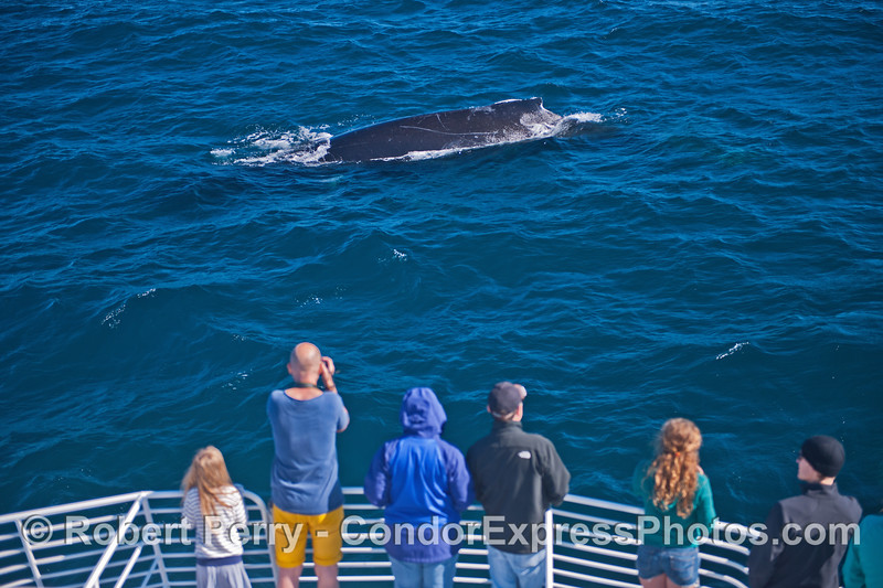Humpback fans line up to get a close look at the friendly beast