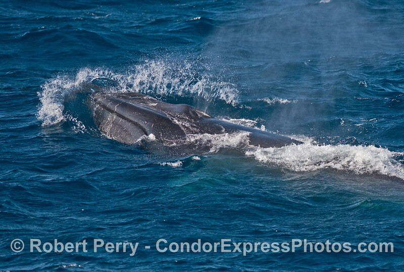 More waves coming at a fin whale
