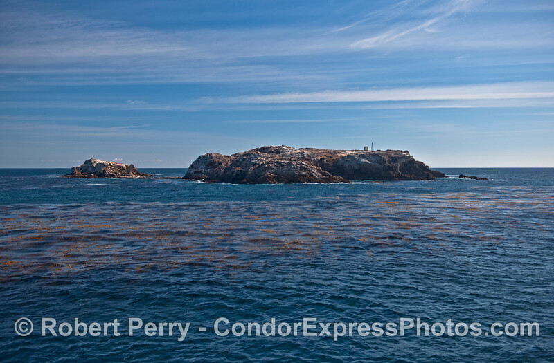 Gull Island and its kelp beds
