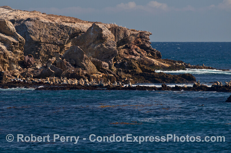 Sea lions on the rocks - Gull Island