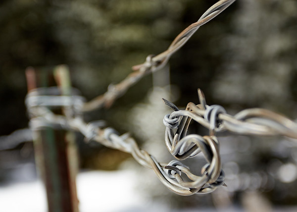 Barbed Wire S