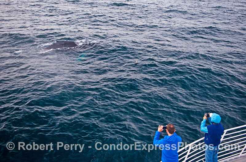 Whale watchers enjoy a close look at a friendly humpback whale