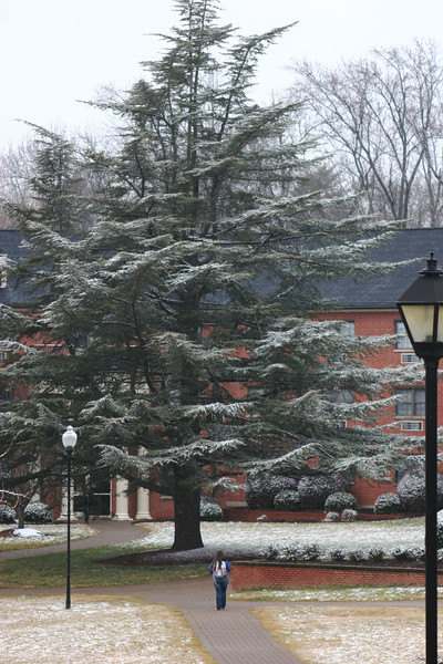 Snow covering the tree in front of Stroup Hall on the campus of Gardner-Webb University.