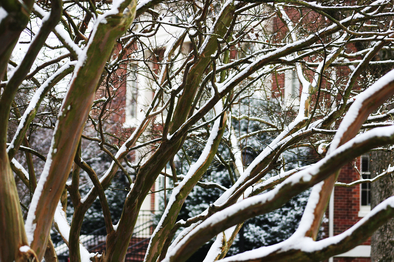 Snow on the trees in front of Hamrick Hall on the campus of Gardner-Webb University.