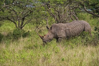 Tala Game Reserve  Rhinos