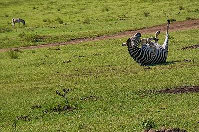 Tala Game Reserve Zebra