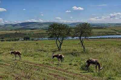 Tala Game Reserve  Kudu