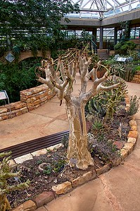 Kirstenbosch National Botanic Gardens